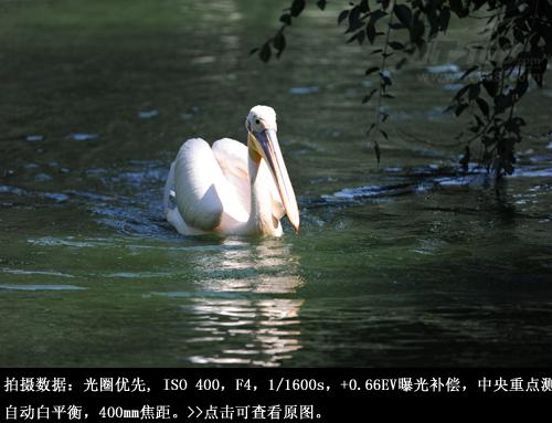北京动物园飞禽湖样张赏