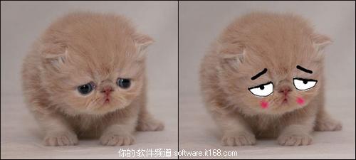 太可爱了!美图拍拍捕捉的宠物超萌表情