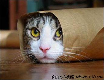 壁纸 动物 猫 猫咪 小猫 桌面 343_263