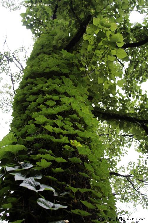 绿色山水树壁纸