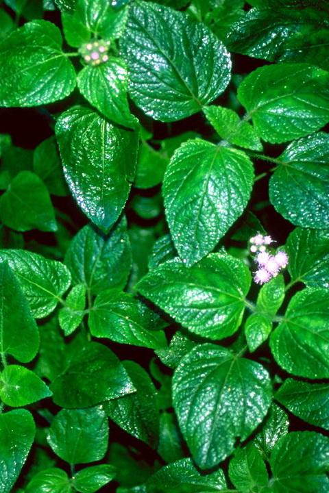手机壁纸高清风景植物_植物风景图案
