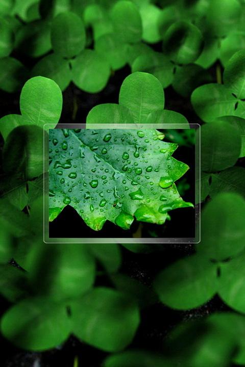 醉人的绿 魅族m9手机高清绿色风景壁纸