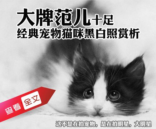 大牌范儿十足 经典宠物猫咪黑白照赏析