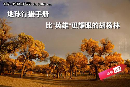 【it168 资讯】一部《英雄》让金秋灿烂的胡杨林和额济纳旗的名字