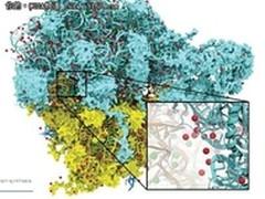 快速应对H1N1:GPU计算加速分子建模