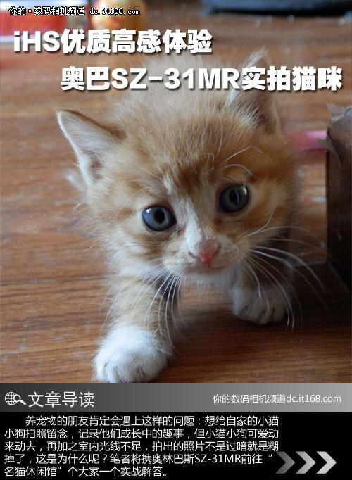 壁纸 动物 猫 猫咪 小猫 桌面 500_682 竖版 竖屏 手机