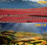 2012 SAP中国商业同略会亮点全面解读