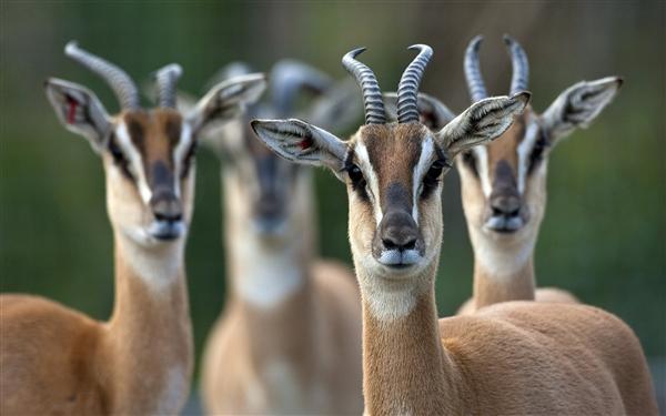 Win7和Win8新通用主题《非洲野生动物》