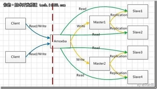 图3.Amoeba