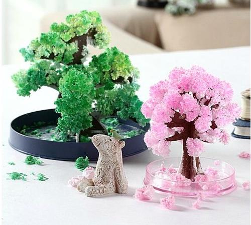 纸树开花长叶
