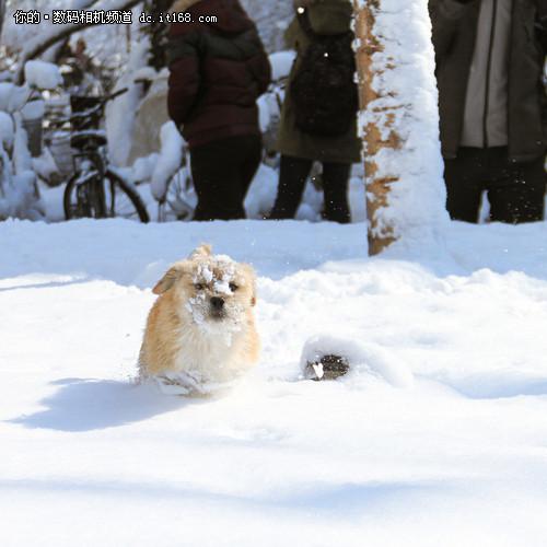 冬日来临,三招教你快速学会拍雪景