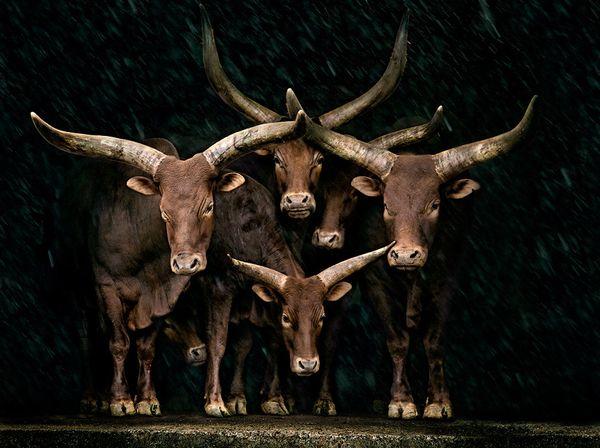 纪实摄影:29张顶级动物摄影作品