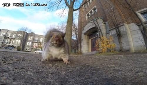 发现摄影机偷拍 超萌松鼠没收GoPro