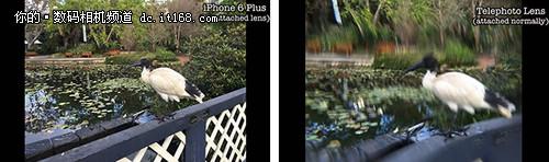 注意:磁铁会干扰iPhone 6 Plus摄像头