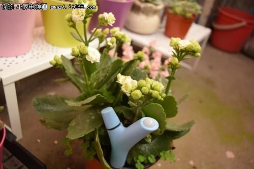 享智能园艺乐趣 派诺特FlowerPower试用