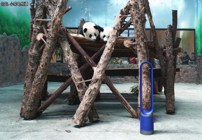 戴森为成都大熊猫繁育研究基地提供支持
