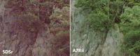 佳能5DsR与索尼A7R II动态范围表现对比