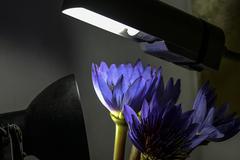 手机摄影讲堂九 台灯如何拍出梦幻花朵