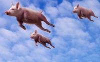 智能穿戴风口的那群猪现在飞到哪儿了?
