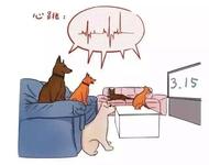 """央视315晚会""""雷神之锤""""挥互联网企业"""