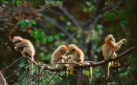 希捷硬盘助中国野生动物摄影师保护自然