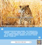 EOS纳米比亚之旅1 与非洲豹的亲密接触