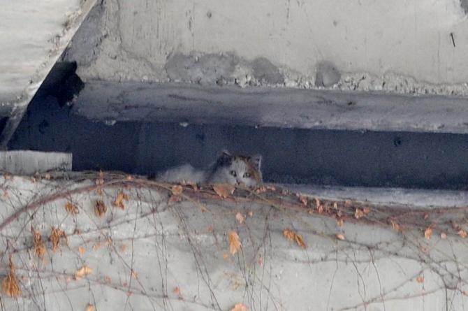 小猫困高架桥两年 老人甩食救助:生命珍贵