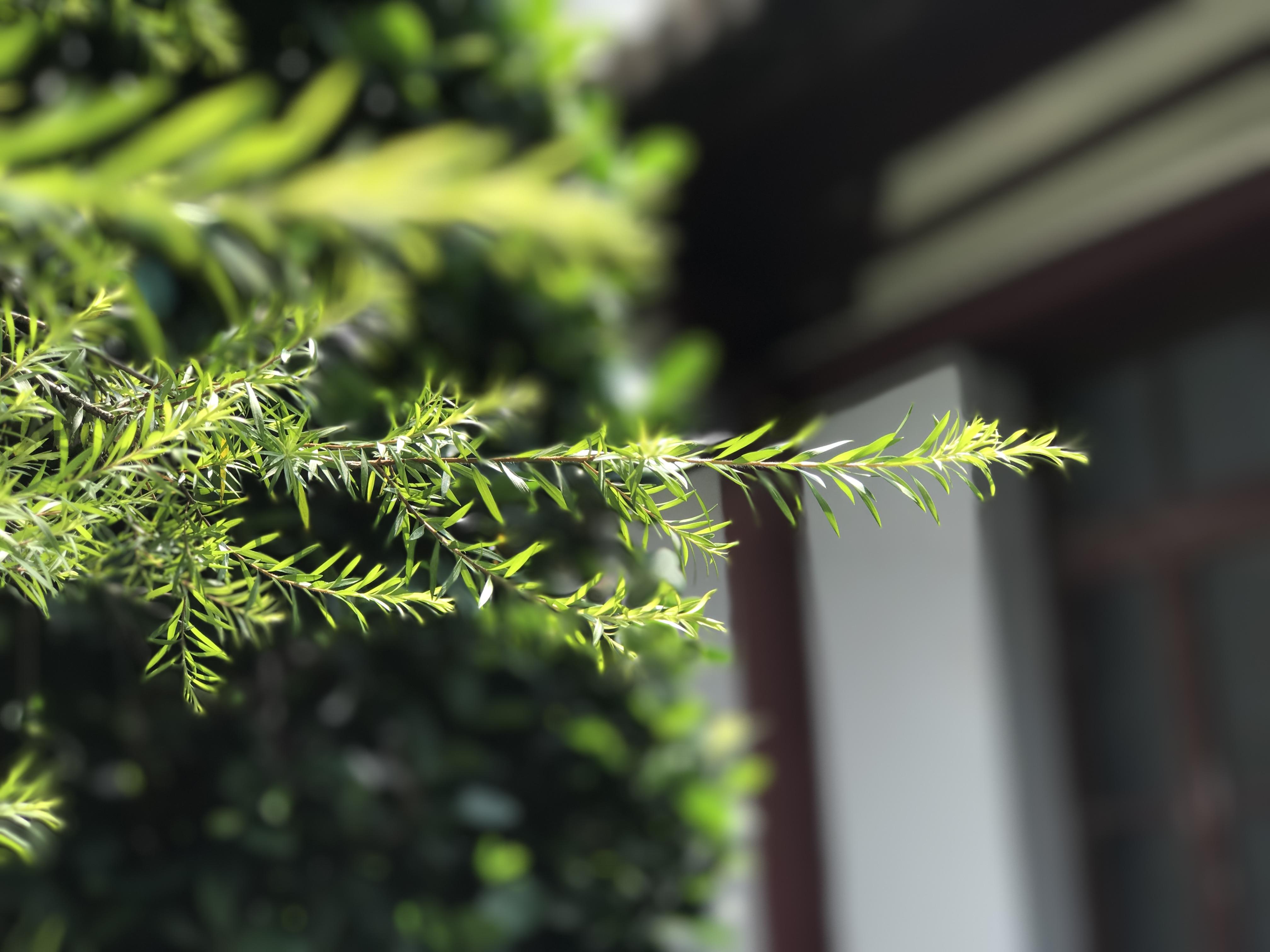 魅蓝Note6拍照体验