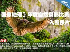 《国家地理》年度自然摄影比赛入围照片