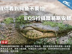 当你看到鳄鱼不要怕 EOS行摄路易斯安那