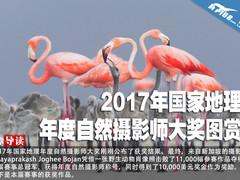 2017年国家地理年度自然摄影师大奖图赏