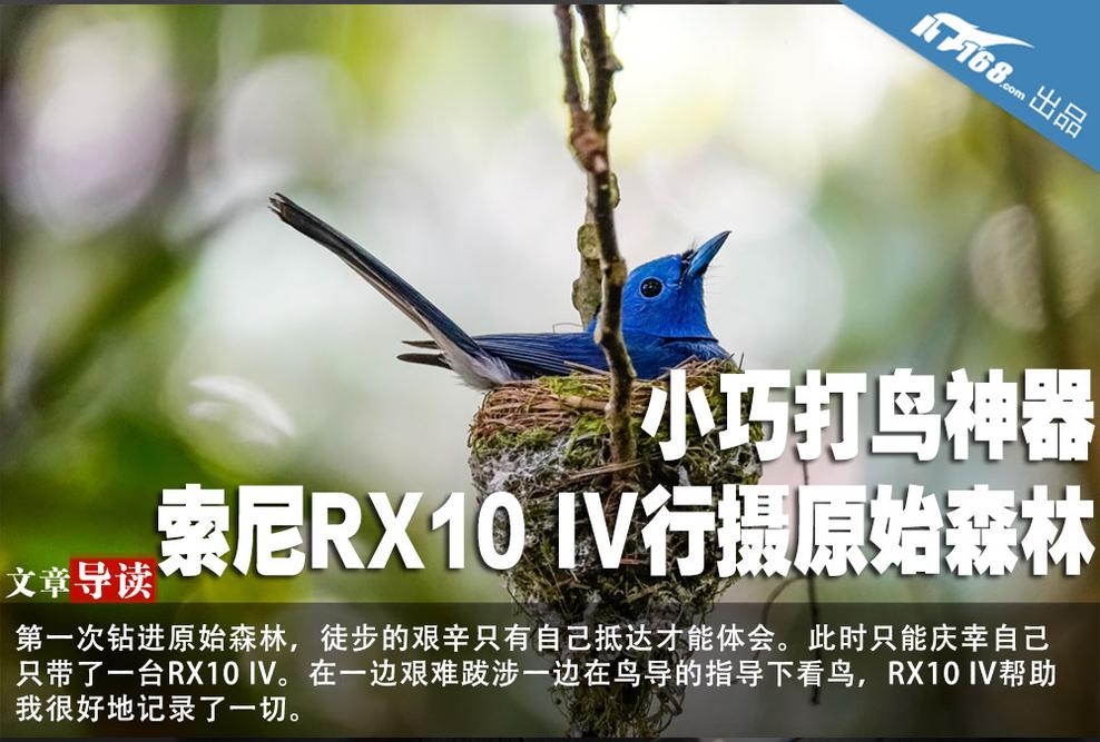 小巧打鸟神器 索尼RX10 IV行摄原始森林