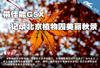 带佳能G5X 记录北京植物园美丽秋景