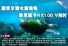 塞舌尔潜水看海龟 索尼黑卡RX100 V样片