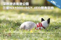 造访深秋银杏 三星NX1000+85/1.4ED实拍