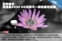 花的姿态 用佳能SX50 HS记录繁花似锦