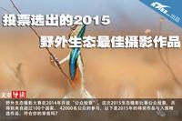 投票选出的2015野外生态最佳摄影作品