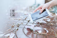 樱花雨下的浪漫 vivo Xplay5S清新图赏