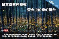 日本森林仲夏夜 萤火虫的奇幻舞台