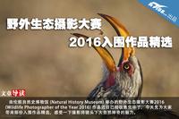 野外生态摄影大赛 2016入围作品精选