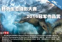 野外生态摄影大赛2016冠军作品赏