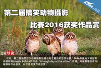 第二届搞笑动物摄影比赛2016获奖作品赏