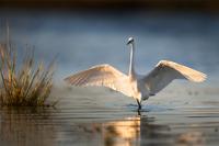 评测补遗 尼康D850野生动物摄影作品选