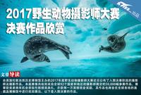 2017野生动物摄影师大赛 决赛作品欣赏