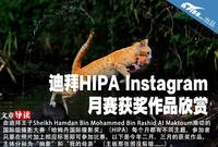 迪拜HIPA Instagram 月赛获奖作品欣赏