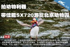 拍动物利器 带佳能SX720游览北京动物园