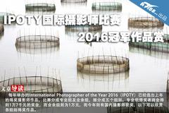 IPOTY国际摄影师比赛2016冠军作品赏