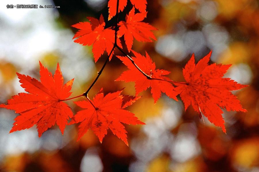 国庆主题树叶粘贴画