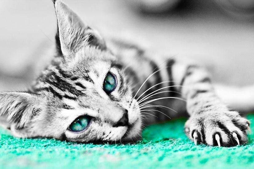 喵了个咪的 大光圈也能让猫猫如此霸气