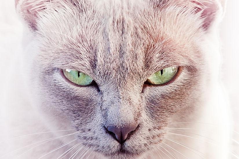 大光圈也能让猫猫如此霸气